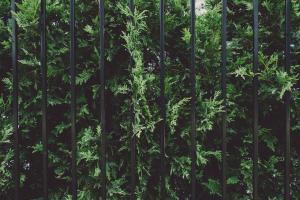 Je clôture mon terrain avec style : trucs, astuces et solutions